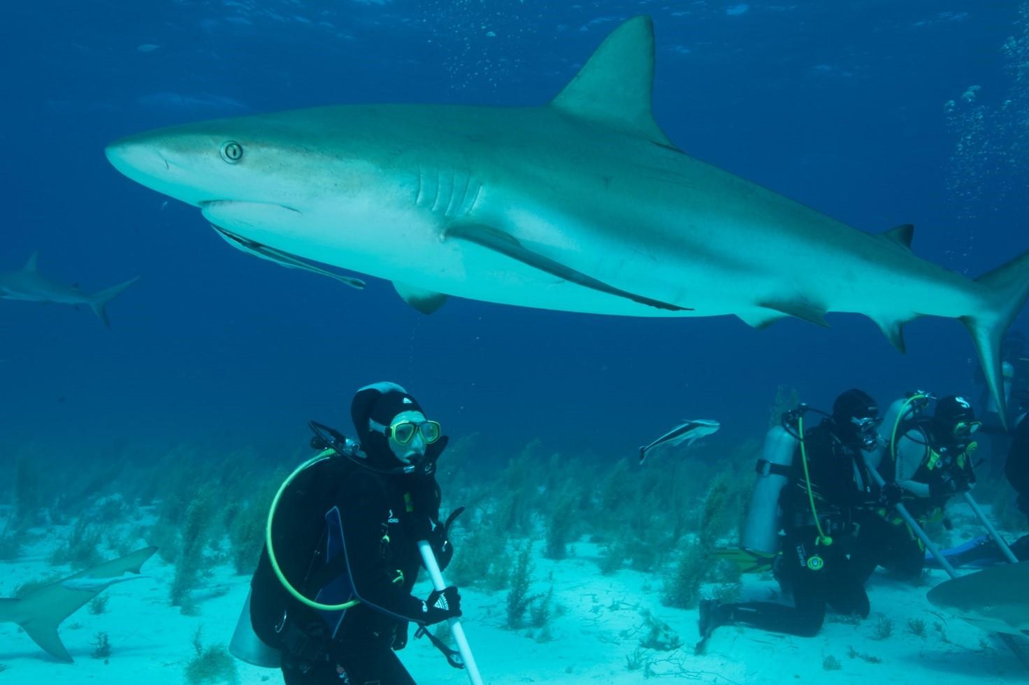 Justyna Adamczyk i ciekawski rekin
