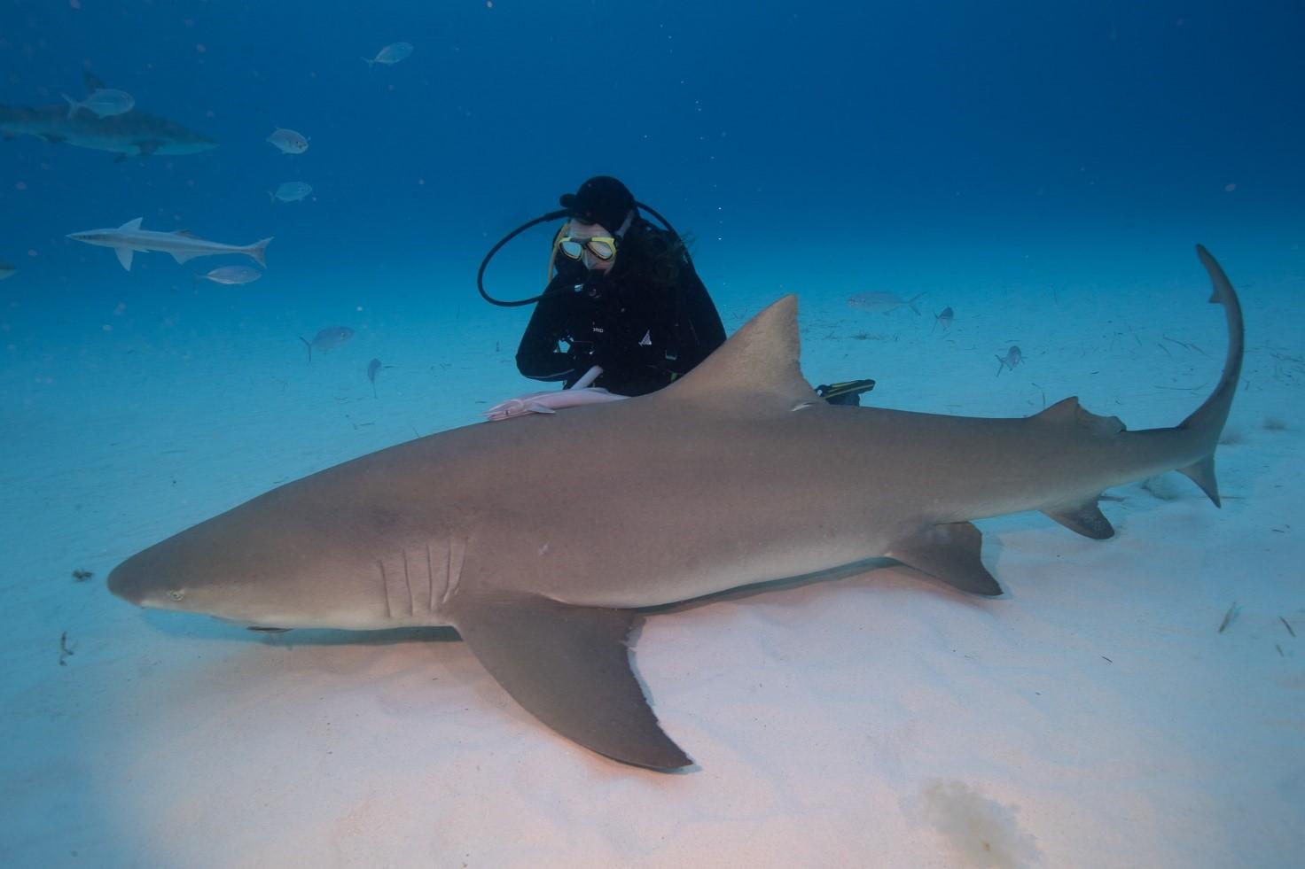 Justyna Adamczyk patrzy na rekina żółtego
